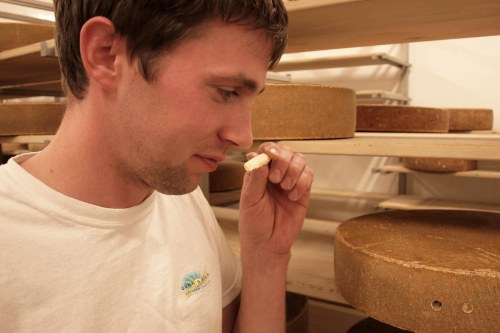 Shep sniffs a core sample of Handegg