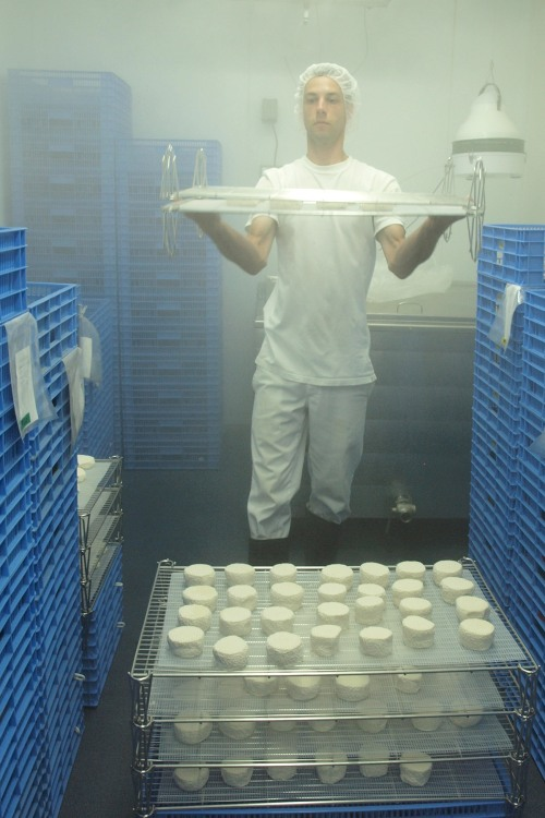 Simon Hamel stacks trays of cheese in a misty ripening room